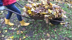 Woman carry barrow cart full of leaves in autumn garden. Handheld. 4K Stock Footage