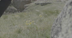 Hiker walking through mountain wildflowers Stock Footage