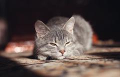 Gray cat preparing to attack Stock Photos