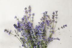 Lavender bouquet of white background Stock Photos
