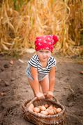 Baby girl on the garden with harvest of potatoes in the basket near field of  Stock Photos