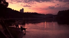 Dog swimming for thrown stick at purple sunset. Slow motion shot Stock Footage