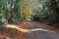 Autumn country road, driveway in Australian outback Stock Photos