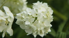 Beautiful white wildflower - stock footage