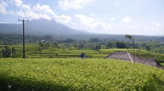Terrace Rice Fields, Bali, Indonesia - stock footage