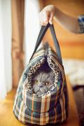 Fluffy cat in carrying - stock photo