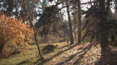 Panorama of autumn park. Stock Footage