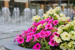 Flower bed on the street - stock photo