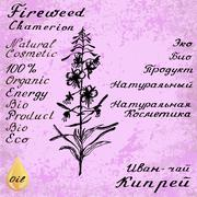 Willow herb, Chamerion, fireweed, rosebay hand drawn sketch botanical illustr - stock illustration