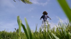 Green Field with Scarecrow against Clean Blue Sky in Sunny Day Stock Footage