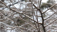 Branches covered in ice following an ice storm starting to melt. Stock Footage