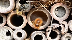 Many bees insect hotel Stock Footage