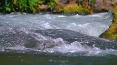 River torrent in forest Stock Footage