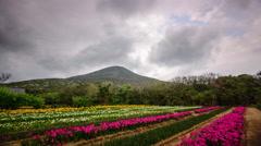 Hachijojima Japan Landscape Stock Footage