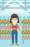 Farmer collecting tomatos vector illustration Stock Illustration