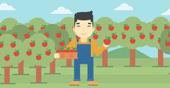 Farmer collecting apples vector illustration Stock Illustration
