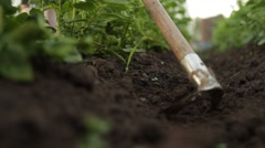 Gardener with hoe cultivating green plants Stock Footage