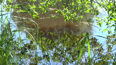 Natural pool - foliage reflection on water of a pond - panoramic down Stock Footage