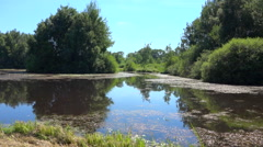 Bucolic pond in nature - peaceful natural scene - panoramic Stock Footage