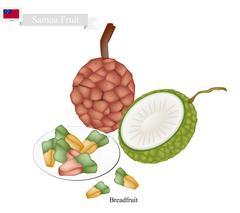 Pandanus Tectorius, A Native Fruit in Samoa Stock Illustration