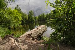 Pond in the park and the log in the foreground Stock Photos