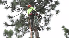 Lumberjack climbs tree and trims limbs at 65 ft Stock Footage