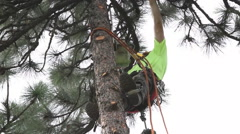 Lumberjack climbs tree and trims limbs at 50 ft Stock Footage
