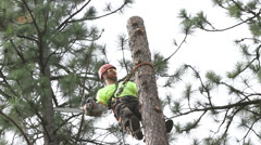 Lumberjack topping 'rounds' 50 ft - stock footage
