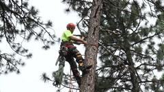 Lumberjack Trims Limbs at 32 ft Stock Footage