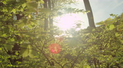 SLOW MOTION CLOSEUP: Sunbeams shinning through leaves fluttering in sunny forest Stock Footage