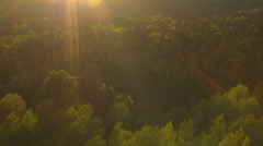 AERIAL: Golden sunbeams shining on lush green treetops in mixed forest at sunset Stock Footage