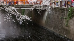 Cherry blossoms at Meguro river, Tokyo, Japan Stock Footage