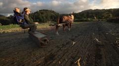 Horse pulling plow on organic farm, Oregon - stock footage