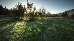 Apple orchard, organic farm, Oregon Stock Footage