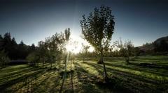 Apple orchard, organic farm, Oregon Stock Footage