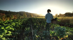 Woman working organic farm, Oregon Stock Footage