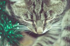 Retro Tabby Cat and Green Tinsel - stock photo