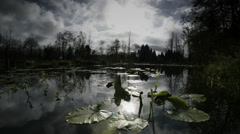 Lilly pads on pond, Oregon Stock Footage