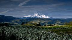 Apple orchard and Mount Hood, Oregon Stock Footage