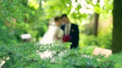 Happy newlywed bride and groom kissing in the autumn pine forest Stock Footage