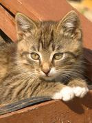 Striped kitten Stock Photos