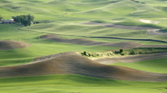 Rolling hills and Fields of wheat, Palouse, Washington Stock Footage