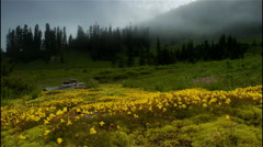 Mountain meadow with wildflowers, Mount Rainier National Park, Washington Stock Footage