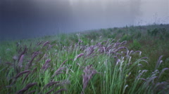 POV over tall grass and ferns in fog - stock footage