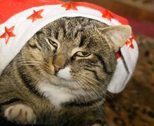Tabby Cat Portrait - stock photo