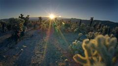 Aerial POV, through cholla cactus garden, Joshua Tree  National Park, California - stock footage