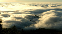 Sea of fog over Redwood forest, Redwood National Park, California Stock Footage