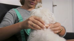 Woman Dog Owner Putting Flea Collar To Pet Stock Footage
