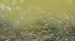 Muddy Water Moving Grass On The River Bank Stock Footage