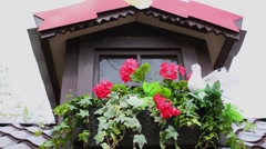 Red flowerbed at second floor window and roof at spring day Stock Footage